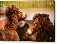 Wild Horses 5 Acrylic Print