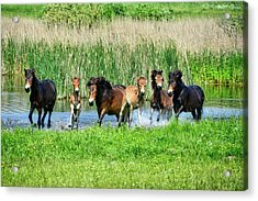 Wild Horses 6 Acrylic Print