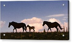 Wild Horses And Clouds Acrylic Print