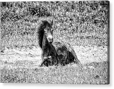 Wild Horses Bw3 Acrylic Print