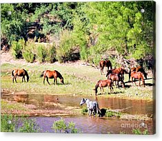 Wild Horses Grazing At Waterhole  Acrylic Print