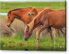 Wild Horses Of Assateague Island Acrylic Print by Rick Berk