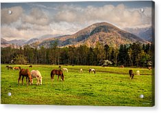 Acrylic Print featuring the photograph Wild Horses by Rebecca Hiatt