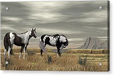 Wild Horses Acrylic Print by Walter Colvin