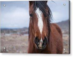 Wild In Nevada Acrylic Print