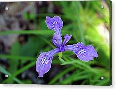 Acrylic Print featuring the photograph Wild Iris by Ben Upham III