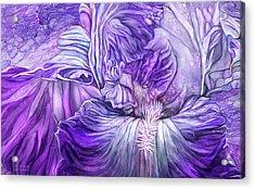 Acrylic Print featuring the mixed media Wild Iris Purple by Carol Cavalaris