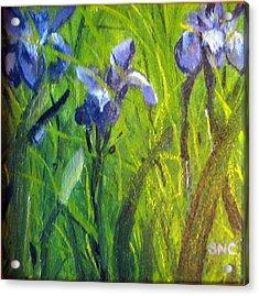 Wild Iris Acrylic Print by Susan Coffin