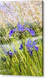 Wild Irises Acrylic Print by Marty Saccone