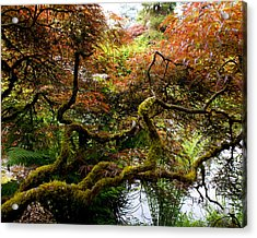 Wild Japanese Maple Acrylic Print by Sonja Anderson