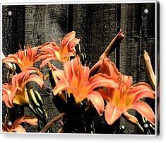 Wild Lily's Acrylic Print by Richard N Watkins