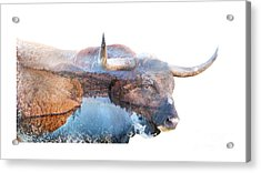 Wild Longhorn Bull And Lake Double Exposure Acrylic Print