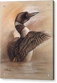 Wild Loon - Wildlife Drawing Acrylic Print
