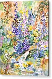 Wild Lupines Acrylic Print