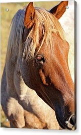 Acrylic Print featuring the photograph Wild Mustang by Kate Purdy