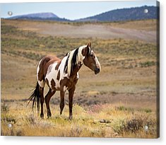 Wild Mustang Stallion Picasso Of Sand Wash Basin Acrylic Print