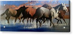 Wild Mustangs Of The Verder River Acrylic Print