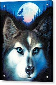 Wild One Acrylic Print by Andrew Farley