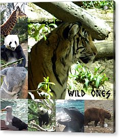 Acrylic Print featuring the photograph Wild Ones by Amanda Eberly-Kudamik