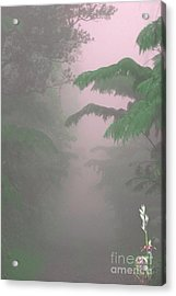 Wild Orchid In Volcano Mist Acrylic Print by Uldra Patty Johnson