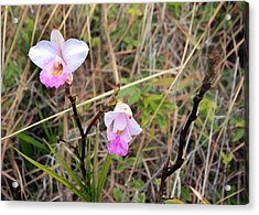 Wild Orchid Acrylic Print