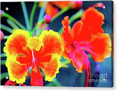 Acrylic Print featuring the photograph Wild Orchids In Hawaii by D Davila