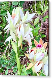 Wild Orchids In Pastel 2 Acrylic Print