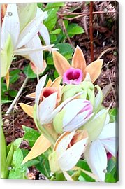 Wild Orchids In Pastel Acrylic Print