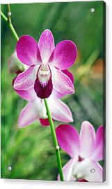 Wild Orchids Acrylic Print by Michael Peychich