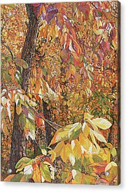 Wild Persimmon Trees Acrylic Print by Nadi Spencer