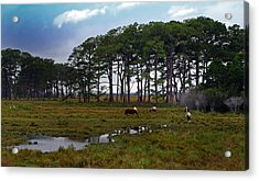 Wild Ponies Of Assateague Acrylic Print by Lori Tambakis
