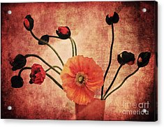 Wild Poppies Acrylic Print by Angela Doelling AD DESIGN Photo and PhotoArt