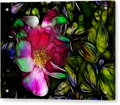 Wild Rose - Colors Acrylic Print by Stuart Turnbull