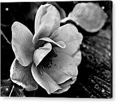 Wild Rose And Salvaged Barn Wood Acrylic Print