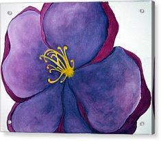 Wild Rose Acrylic Print by Anna Villarreal Garbis