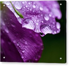 Acrylic Print featuring the photograph Wild Rose Droplet by Darcy Michaelchuk