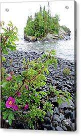 Wild Roses And Island Acrylic Print