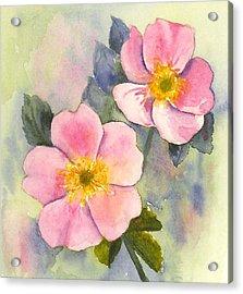 Wild Roses - Glacier Acrylic Print
