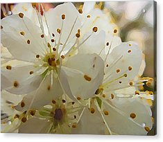 Acrylic Print featuring the digital art Wild Sand Plum  by Shelli Fitzpatrick