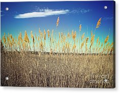Acrylic Print featuring the photograph Wild Sea Oats by Colleen Kammerer