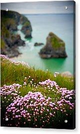 Wild Sea Pinks In Cornwall Acrylic Print