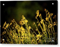 Acrylic Print featuring the photograph Wild Spring Flowers by Kelly Wade