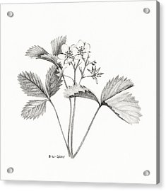 Wild Strawberry Drawing Acrylic Print