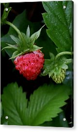 Wild Strawberry Acrylic Print