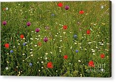 Wild Summer Meadow Acrylic Print