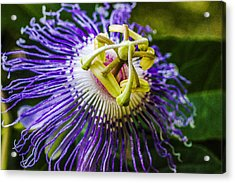 Wild Summer - Passion Flower Acrylic Print by Barry Jones
