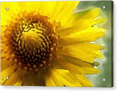 Wild Sunflower Up Close Acrylic Print