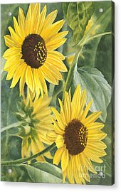 Wild Sunflowers Acrylic Print by Sharon Freeman