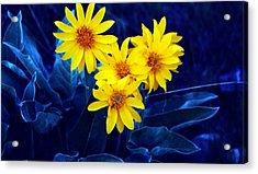 Wild Sunflowers Acrylic Print by Tiffany Vest
