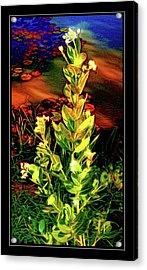 Wild Thai Lake Jasminum - Photo Painting Acrylic Print by Ian Gledhill